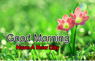New Good Morning 4k Full HD Images Download For Daily%2B28