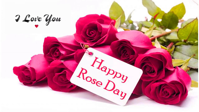 rose day pictures