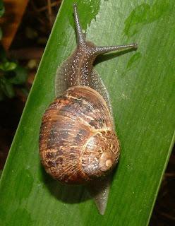 Quién se come mis plantas - Guía para controlar las plagas mas comunes del huerto - 5