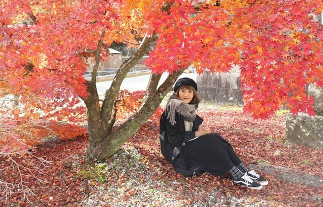 The maple forest is full of red autumn leaves in Japan