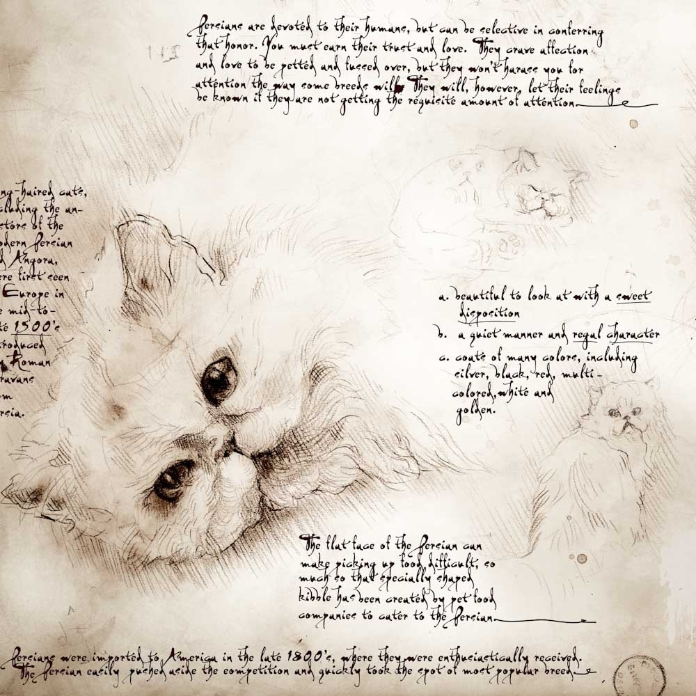 14-Persian-Study-Leonardo-s-Dogs-Cats-and-Dogs-Drawn-in-the-style-of-Leonardo-da-Vinci
