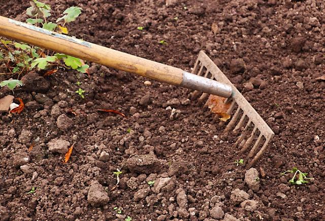 5 How To Grow A Vegetable Garden