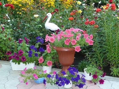 мой цветник в саду