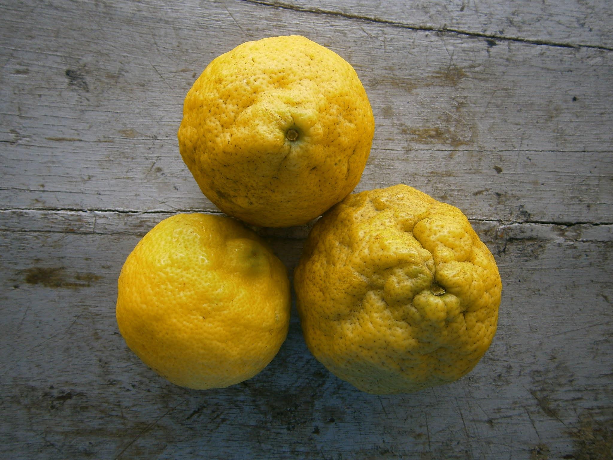 Limones grandes puesto sobre una mesa de color plomo