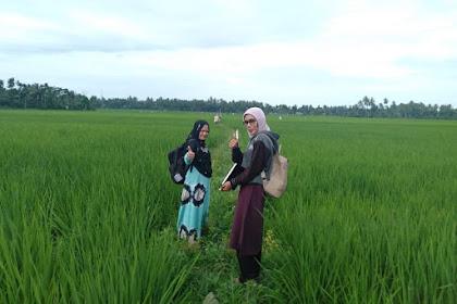 Dana Desa Tingkatkan Pendapatan Petani