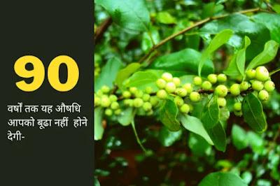 guggul ke fayde in hindi