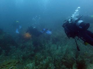2021年9月3日の柏島ダイビング