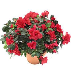 saksı bitkileri saksı saksı bitki