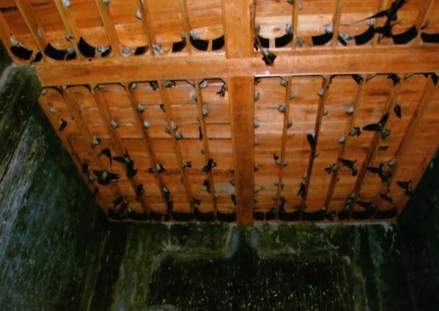 Cara Memancing Burung Walet Agar Mau Bersarang Menggunakan Lampu 5 Watt