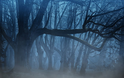 forest-3394066.jpg