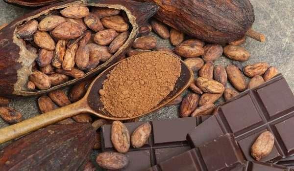 معلومات عن الكاكاو