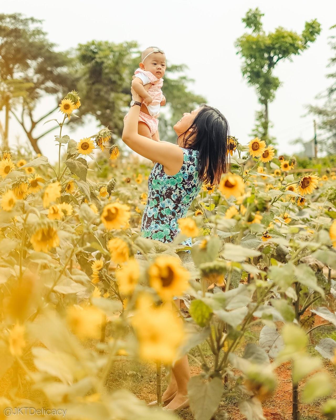 78+ Gambar Bunga Matahari Yang Cantik Terlihat Keren