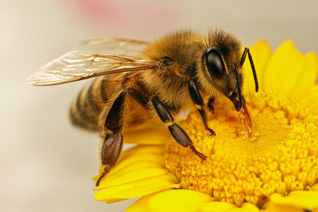 honey bees and flowers relationship with god
