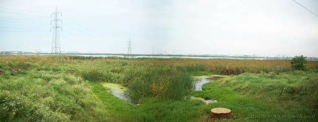 Pallikaranai Wetland Birding Bird watching in Chennai