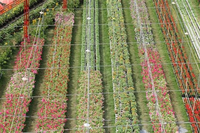Hình ảnh Làng Hoa Sa Đéc nhìn từ trên cao