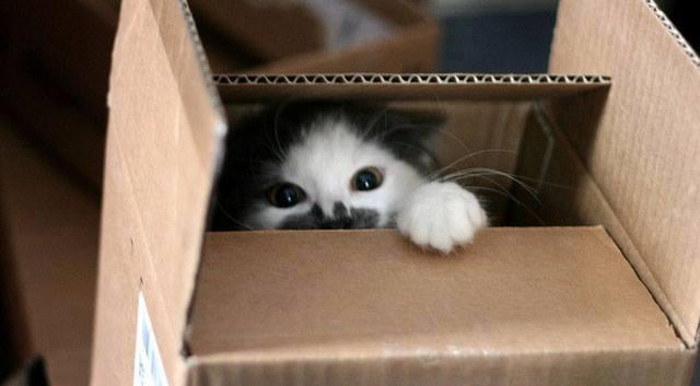 Cats humor #5