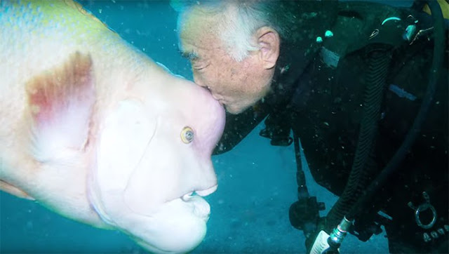 Story of Old Diver And His Strange Underwater Bestfriend Gone Viral
