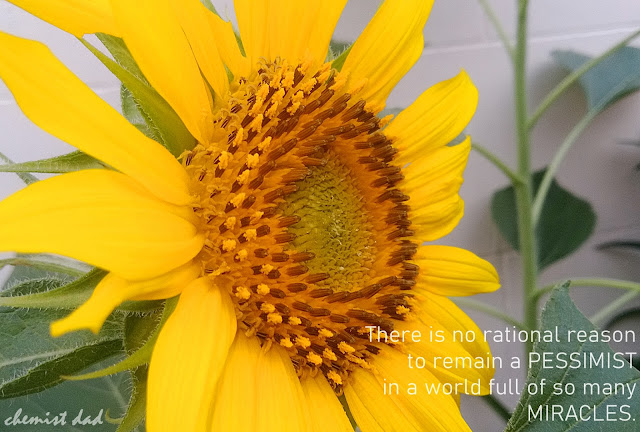 sunflower, life quotes, quotes about flower, Inspirational Quotes, captured moments,