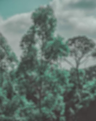 Silver Green Effect Blur Background Tree Free Stock