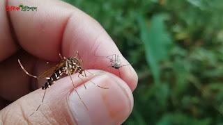 মশা দিয়ে মশা মারার কৌশল Killing Mosquito Tips