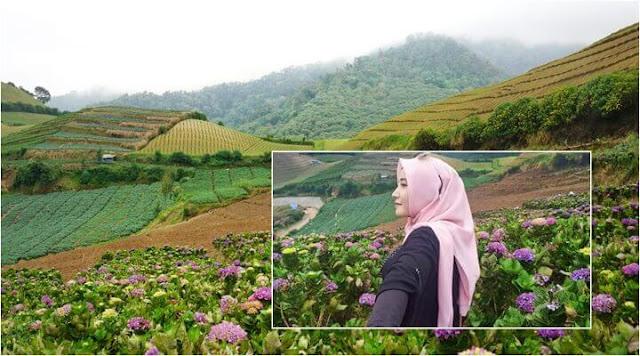 tempat liburan bunga hortensia