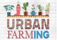 Ancaman Resesi, 5 Budidaya Pertanian Perkotaan Ini Bisa Menjadi Sumber Pangan Keluarga