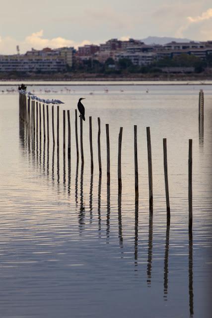 Parco naturale Molentargius-Saline-Cagliari-Cormorani