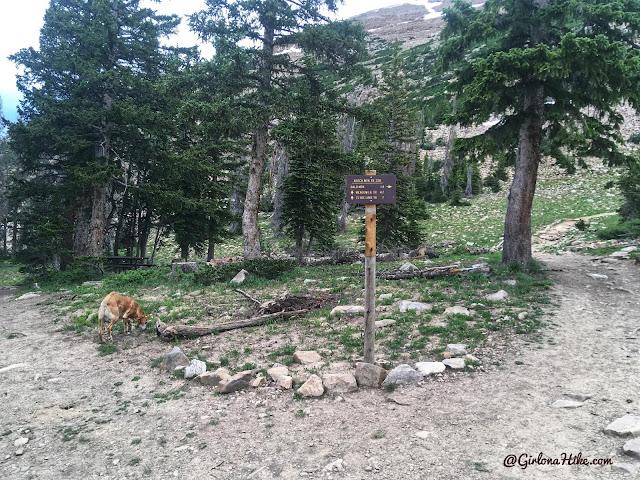 Hiking to Reids Peak, Uintas, Uinta peaks, hiking in the uintas, hiking in utah with dogs