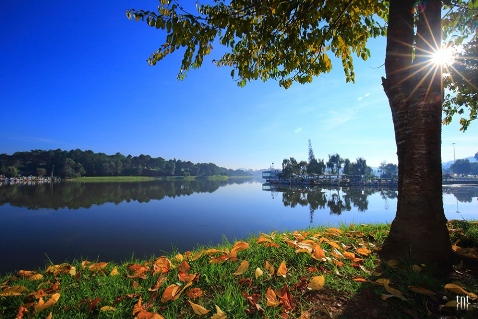 Sắc vàng của mùa thu chạm ngõ tháng 10 Đà Lạt - Ảnh : Trương Ngọc Thụy