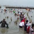 TNI Ikut Gerakan Penanaman 10.000 Bibit Pohon Mangrove Di Desa Timbulsloko