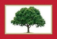 Tree Dream Meaning and Interpretations – DREAMLAND