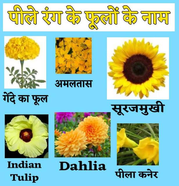 पीले रंग के फूलों के नाम - Yellow flowers name