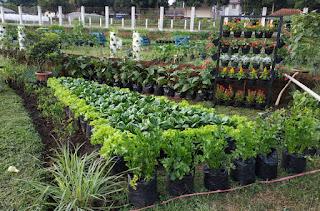 """""""Urban Farming"""" Solusi Pertanian Berkelanjutan"""