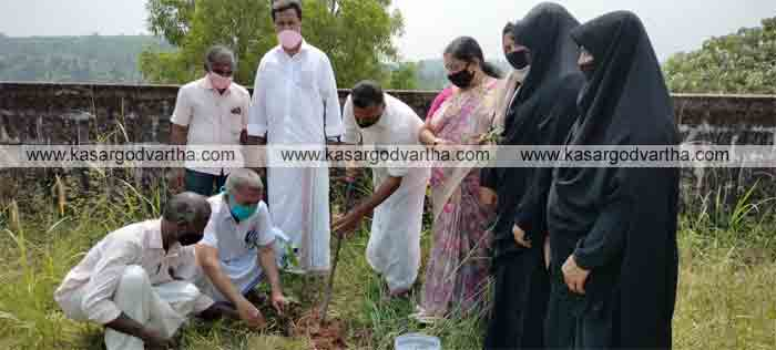 Tree saplings planted on Kerala's birthday