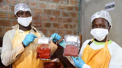 Productores de achiote del Chocó ponen a disposición de la industria de alimentos los extractos de bixina y norbixina