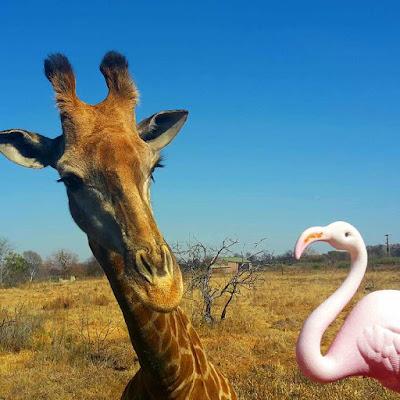 Plastic lawn flamingo and giraffe