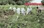 Kapolsek Marbo, Pimpin Pemakaman Jenazah Covid-19 Dengan Pengawalan Ketat Kepolisian Bersama Tim Medis