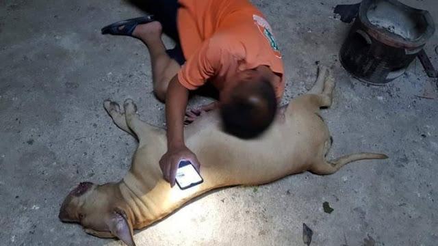 Собака спасла семью от змей!!!