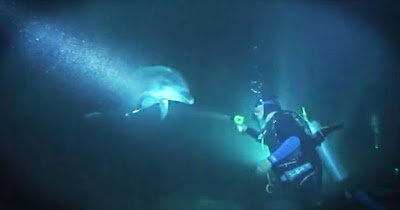 Diver Keller Laros rescues injured bottelnose dolphin