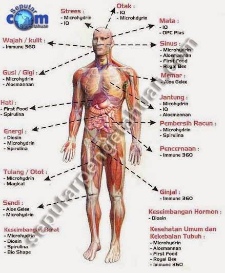 Diario Estudo Vania Babo Anatomi Fisiologi Tubuh Manusia