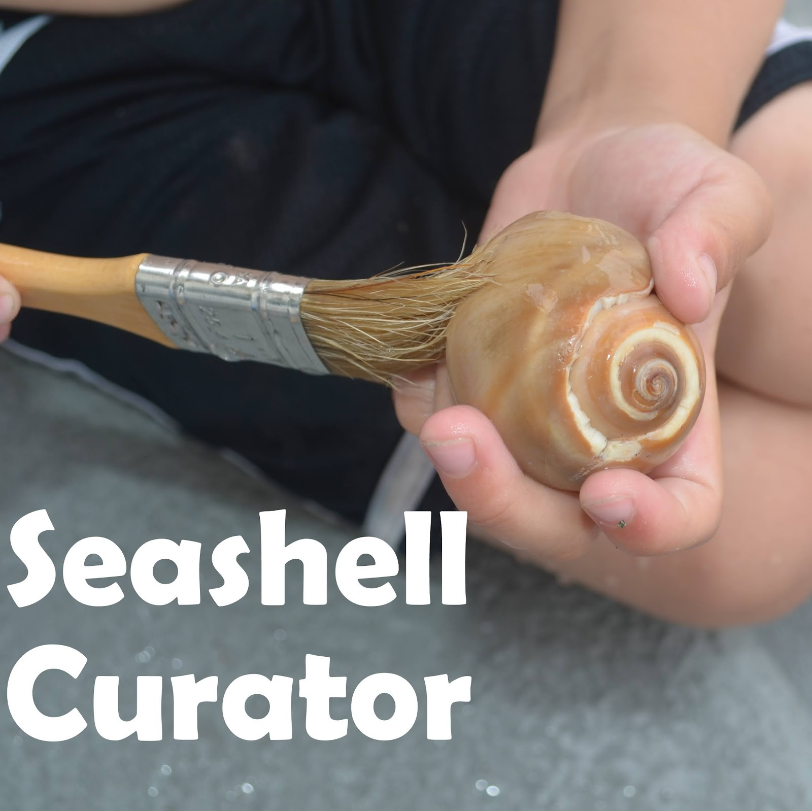 Curate A Seashell Museum