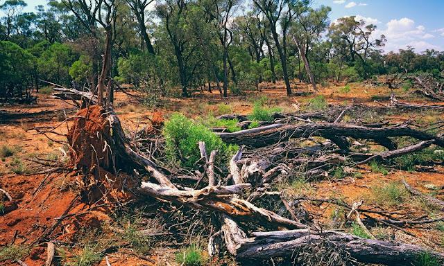Dirubahnya Kawasan Hutan Menjadi Non Hutan (Deforestation), Berpotensi Menghilangkan Habitat Satwa Fauna & Terjadinya Perubahan Iklim / Global Warming di Bumi.