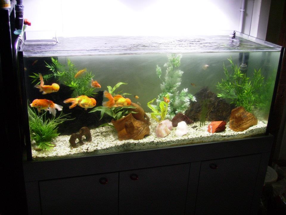Pirana aquarium illuminazione per acquari consigli per gli acquisti
