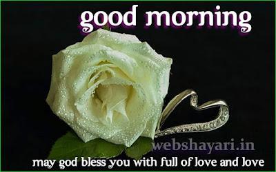 rose  good morning img