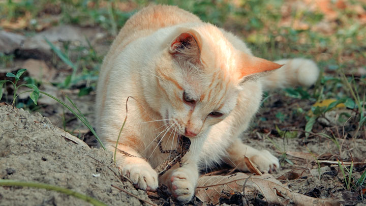 cat-illness-symptoms-lethargy