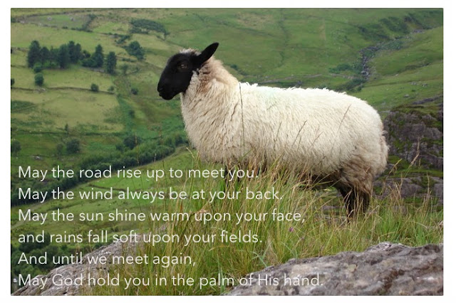 Venture & Roam - Old Irish Blessing, Ireland, Irish Sheep, Irish Field