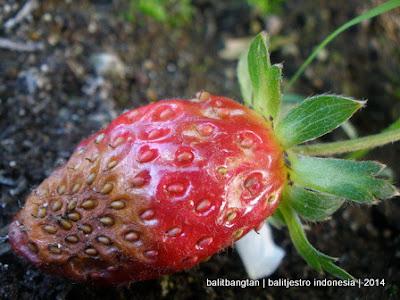 urban hidroponik urban farming
