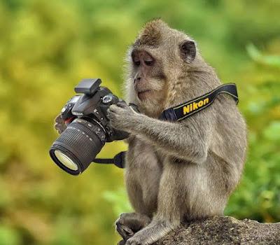 Simpatica imagen de mono fotografo