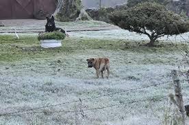 A foto mostra o gelo nos campos do Rio grande do Sul.