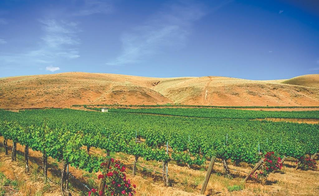 Avennia purchases Red Mountain vineyard